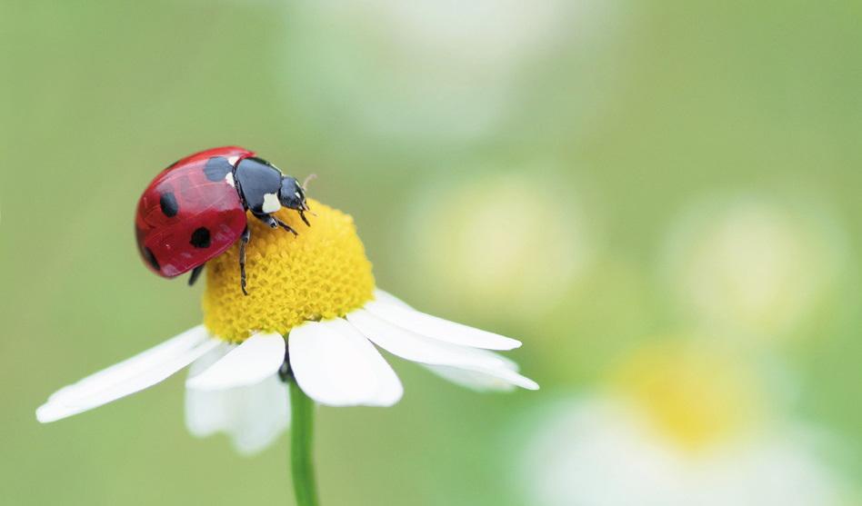 Ein Wohlfühlparadies für Insekten